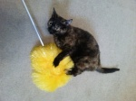 Rita feather duster 0713
