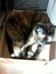 Rita in box 2013