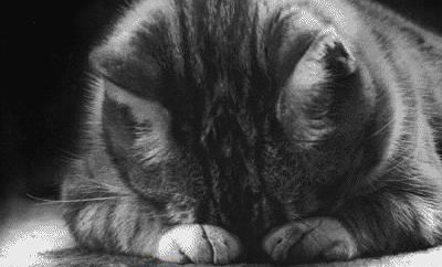 cat pray