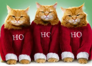 grumpy-cats-christmas-cards